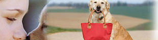 tripadvisor.com restaurants with dogs allowed in williamsburg, va; dog friendly restaurants in williamsburg, virginia